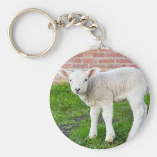 One white newborn lamb standing in green grass basic round button keychain
