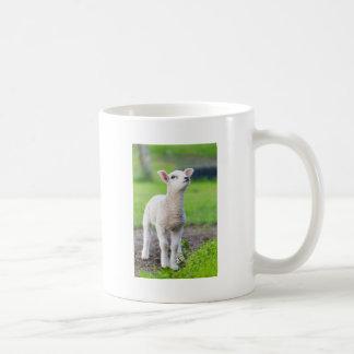 One white newborn lamb standing in green grass coffee mug