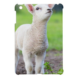One white newborn lamb standing in green grass iPad mini case
