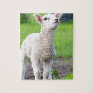 One white newborn lamb standing in green grass jigsaw puzzle