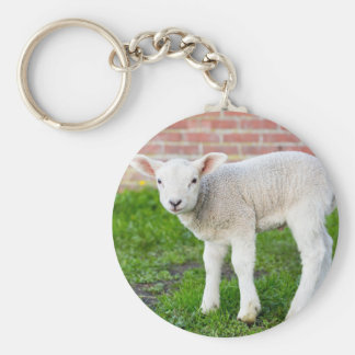 One white newborn lamb standing in green grass keychain
