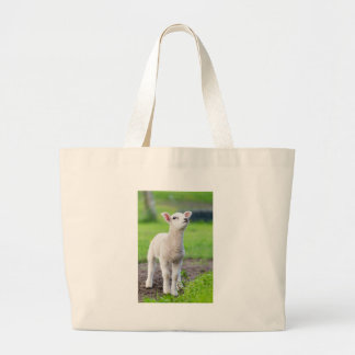 One white newborn lamb standing in green grass large tote bag