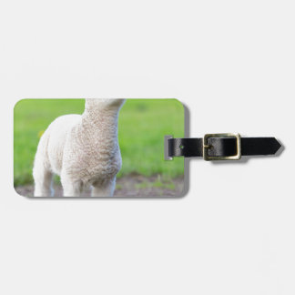 One white newborn lamb standing in green grass luggage tag