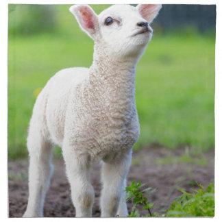 One white newborn lamb standing in green grass napkin