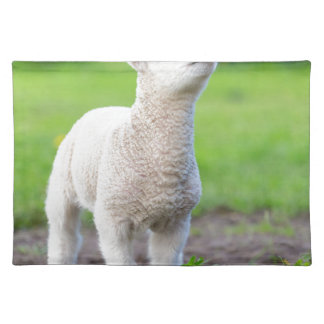 One white newborn lamb standing in green grass placemat