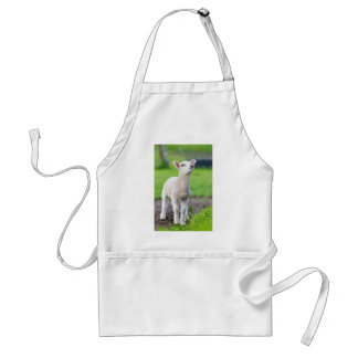 One white newborn lamb standing in green grass standard apron