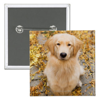 One year old Golden Retriever, portrait 2 Inch Square Button