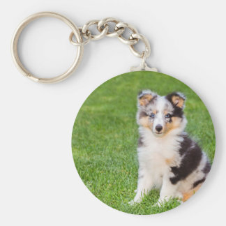 One young sheltie dog sitting on grass basic round button keychain