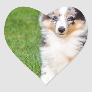 One young sheltie dog sitting on grass heart sticker