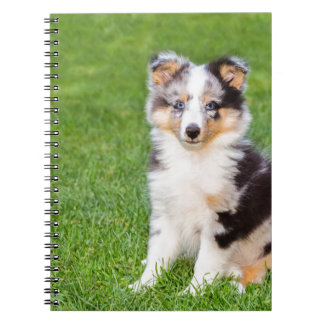 One young sheltie dog sitting on grass notebook