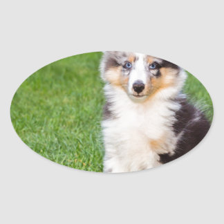 One young sheltie dog sitting on grass oval sticker