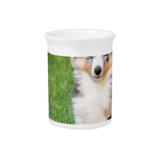 One young sheltie dog sitting on grass pitcher