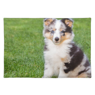 One young sheltie dog sitting on grass placemat