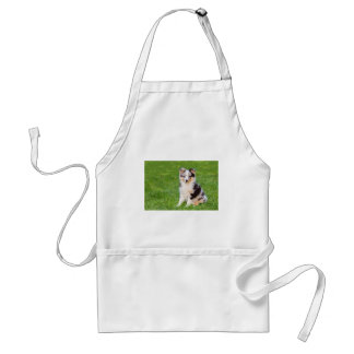 One young sheltie dog sitting on grass standard apron