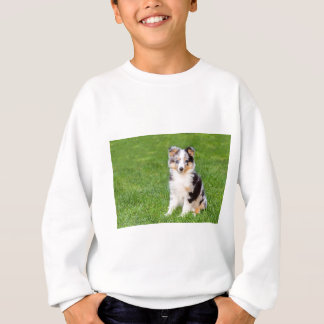 One young sheltie dog sitting on grass sweatshirt