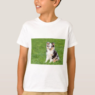 One young sheltie dog sitting on grass T-Shirt