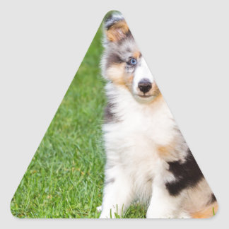 One young sheltie dog sitting on grass triangle sticker