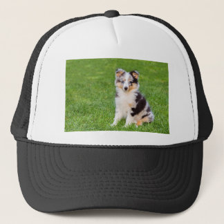 One young sheltie dog sitting on grass trucker hat