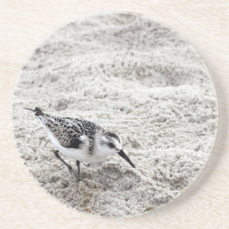 One Young Snowy Plover Bird Coaster