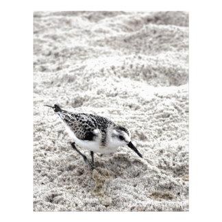 One Young Snowy Plover Bird Custom Letterhead