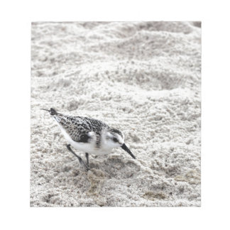 One Young Snowy Plover Bird Notepad