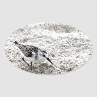 One Young Snowy Plover Bird Oval Sticker