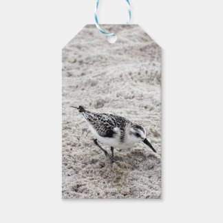 One Young Snowy Plover Bird Pack Of Gift Tags
