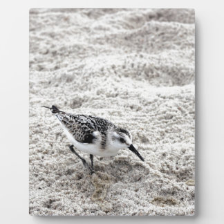 One Young Snowy Plover Bird Plaque