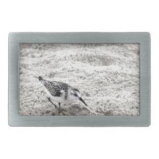 One Young Snowy Plover Bird Rectangular Belt Buckle
