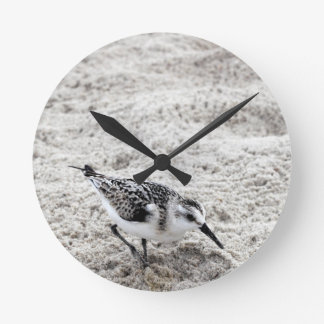 One Young Snowy Plover Bird Round Clock