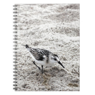 One Young Snowy Plover Bird Spiral Notebook