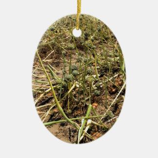 Onion Field Landscape Ceramic Oval Ornament