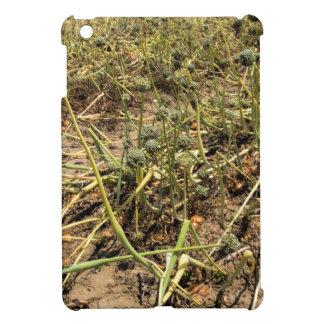 Onion Field Landscape Cover For The iPad Mini