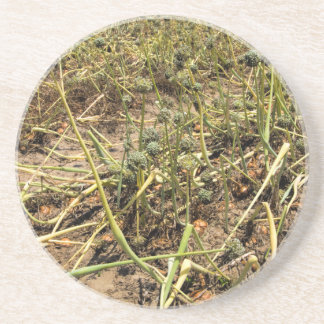 Onion Field Landscape Drink Coasters