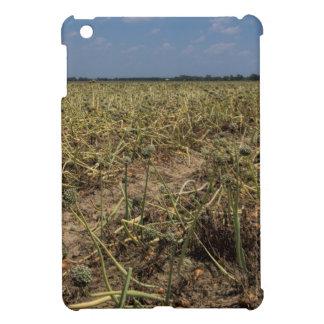 Onion Field Landscape in Georgia Case For The iPad Mini