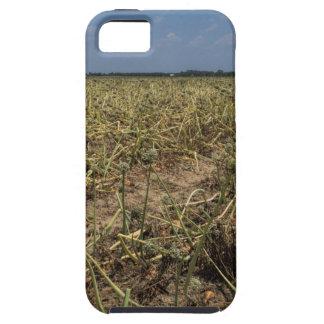 Onion Field Landscape in Georgia iPhone 5 Case