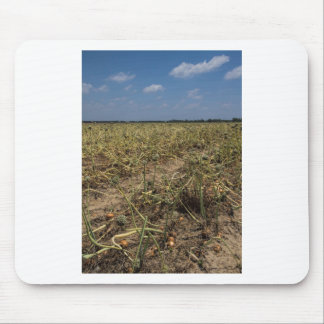 Onion Field Landscape in Georgia Mouse Pad