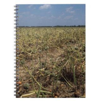 Onion Field Landscape in Georgia Notebooks