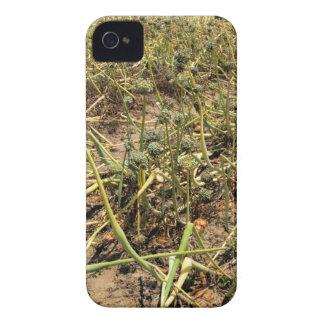 Onion Field Landscape iPhone 4 Case