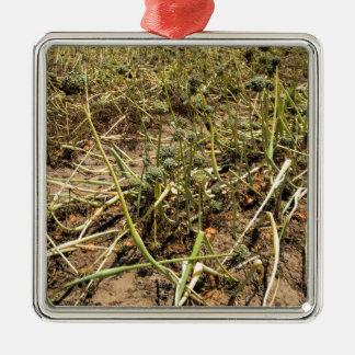 Onion Field Landscape Silver-Colored Square Ornament