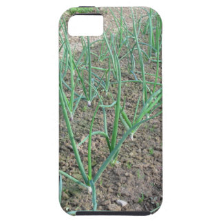 Onion plants in rows in the garden iPhone 5 covers