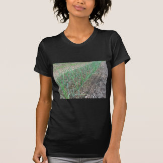 Onion plants in rows in the garden tshirts