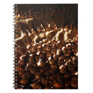 Onions galore notebook