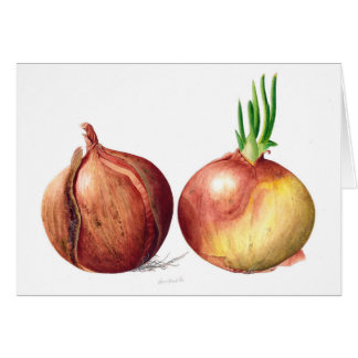 Onions - Watercolour Botanical Painting Card