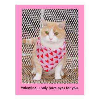 Only have eyes for you. postcard