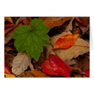 """Onset of Fall"" Greeting Card"