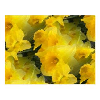 Opaque Flowers Postcards