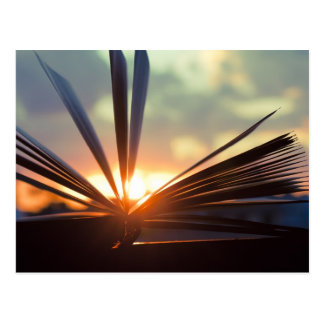 Open Book and Sunset Photography Postcard