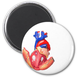Open model human heart on white background 2 inch round magnet