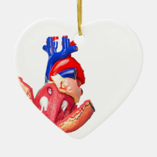 Open model human heart on white background ceramic heart ornament